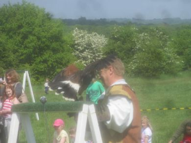 Falconry display, Queen Elizabeth's Hunting Lodge.